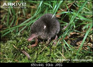 Click image for larger version.  Name:Juvenile-water-shrew-eating-worm.jpg Views:548 Size:92.7 KB ID:81552