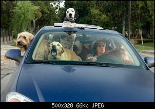 Click image for larger version.  Name:dogs_in_car.jpg Views:132 Size:66.5 KB ID:46251